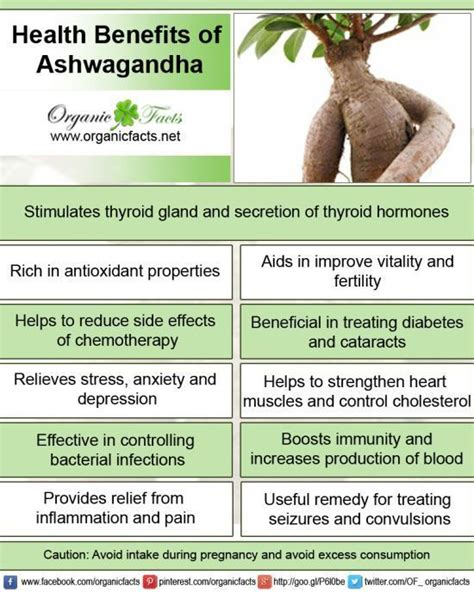 how much indian blood to claim benefits how much indian ashwagandha or indian ginseng has a wide range of health