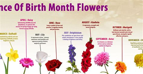 birth month flowers birth month flowers meanings driverlayer search engine