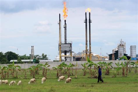 kontraktor migas siap jual minyak  pertamina sesuai