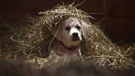 puppy commercial 2015 budweiser bowl commercial lost