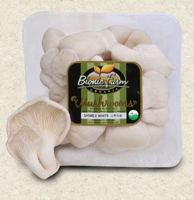 Bibit Jamur Tiram Tangerang jual jamur tiram harga murah kota tangerang oleh ud