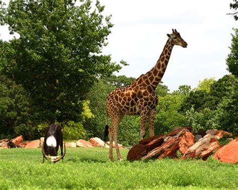 Garden City Zoo Animals Zoos In Oklahoma