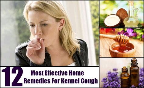 kennel cough home remedies treatments and cures