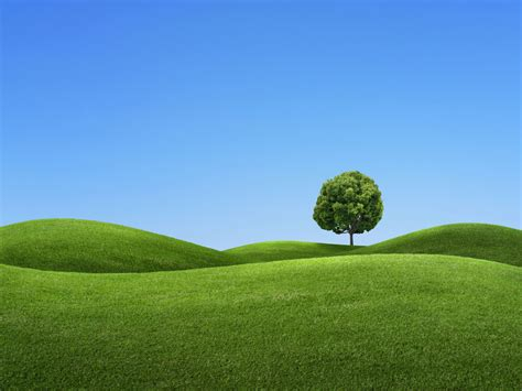 hill background 3d tree wallpaper free 3d wallpaper