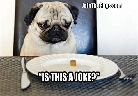 what problems do pugs pugs all there is to gublog gudog uk