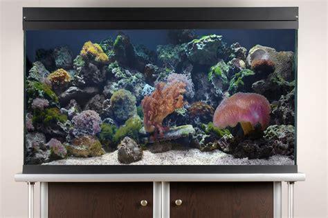 easy saltwater aquarium set  steps