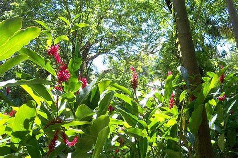 Hauts lieux de la flore à la Réunion Location de voiture Blog Rentacar Réunion