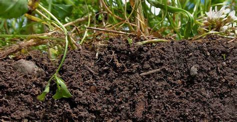 Ask Wet Forget See Our Top Tips To Liven Up Your Soil Vegetable Garden Soil Composition