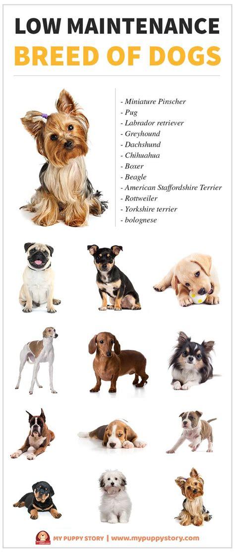maintenance dogs