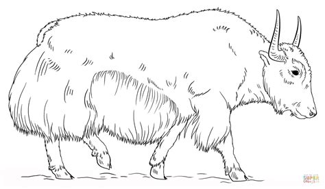 coloring page yak yak coloring pages az coloring pages