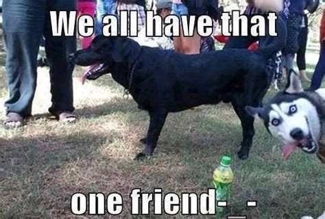 Dog Jokes Meme - dog meme collection funny joke pictures