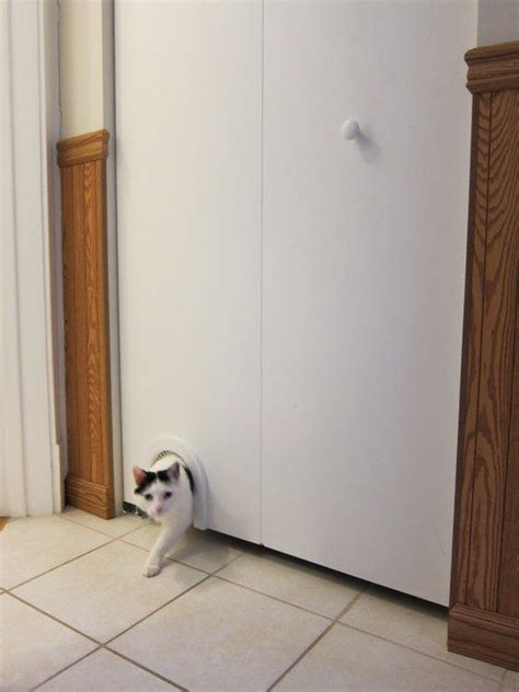 Cat Litter Closet by 17 Best Images About Pets On Toilets Cat