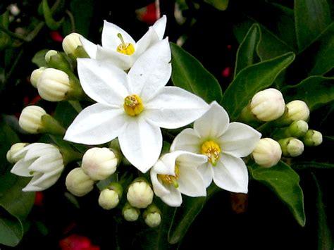 fiori significato guida al linguaggio dei fiori giardini nel mondo