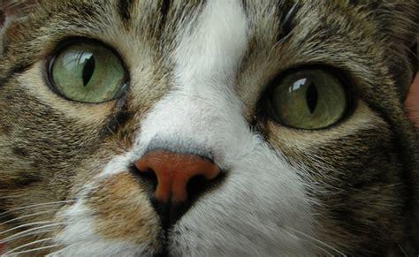 alimentazione gatto alimentazione corretta gatto alimentazione corretta