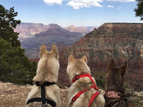 are dogs allowed in yosemite 10 national parks you can actually walk through with your barkpost