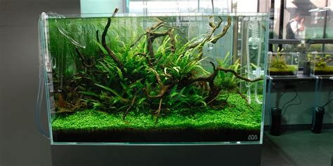 Aquascaping With Driftwood by Aquascape Adana Driftwood Garden Bonsai Aquascape Plants Adana