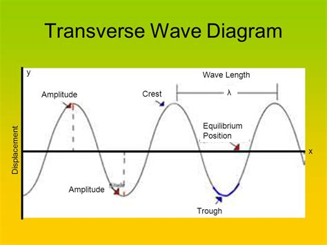 labelled diagram of a transverse wave transverse wave related keywords transverse wave