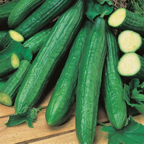 cucumber seeds cucumber indoor telegraph improved seeds d t brown