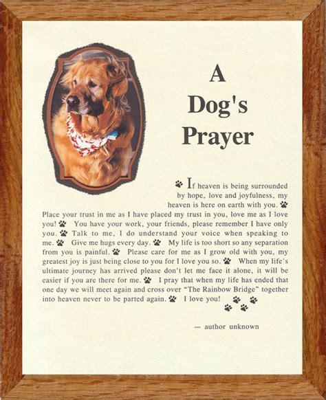 puppy praying pet frames from mt edge pet frames a s prayer