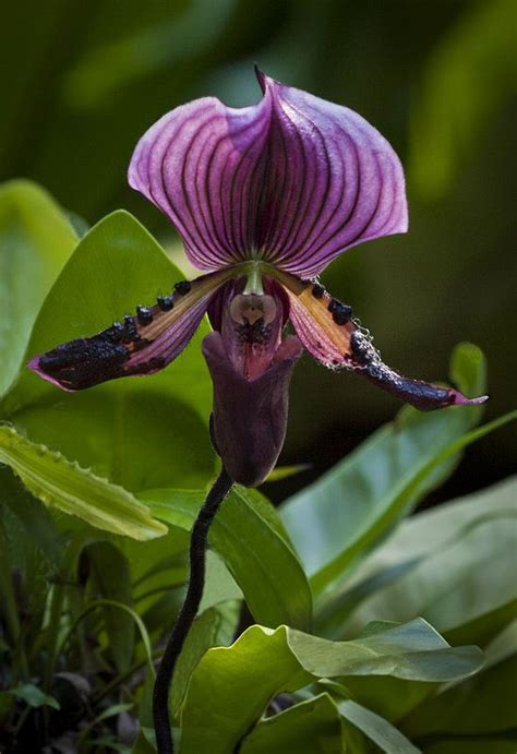 496 Best Images About Potted Orchids On 496 Best Potted Orchids Images On