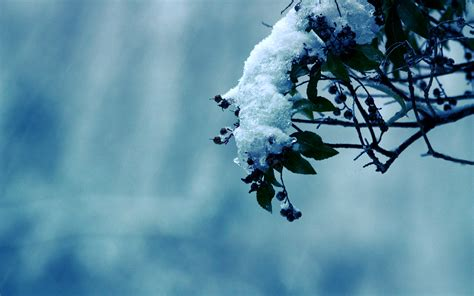 wallpaper in background snow background 17145 1920x1200 px hdwallsource com
