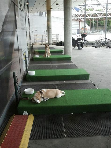 ikea dog parking ikea germany now has parking lots for dogs