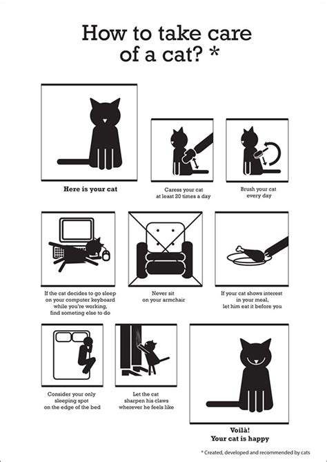 How To Take Care Of How To Take Care Of A Cat On Behance