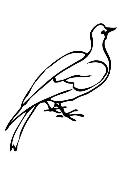 imagenes de palomas blancas grandes dibujo para colorear paloma img 19395