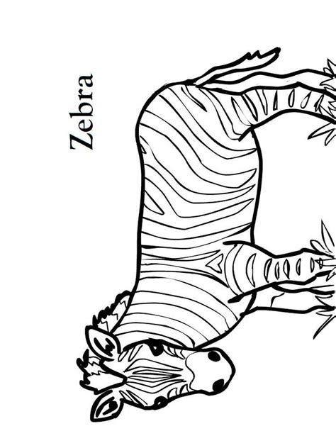 printable zebra facts zebra coloring pages download and print zebra coloring pages