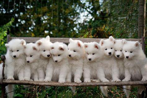 lade berger 10 nombres para perros bonitos nombres para perros