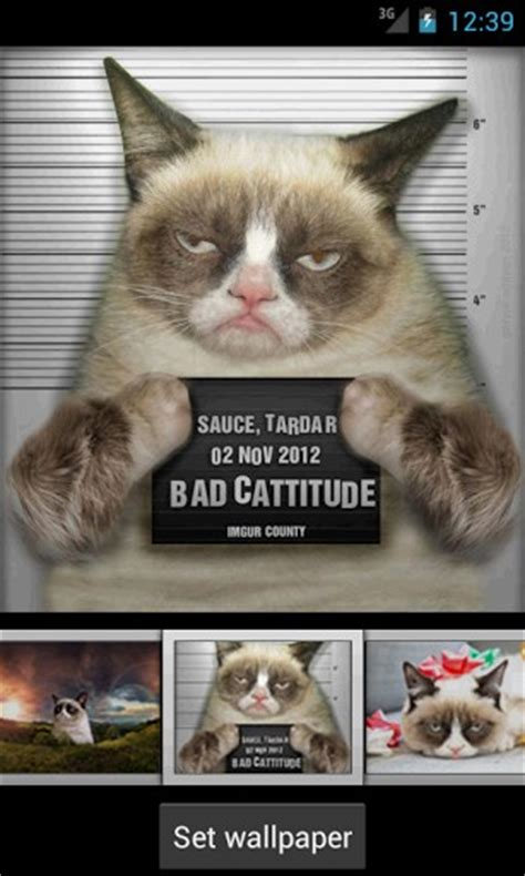 iphone wallpaper grumpy cat grumpy cat iphone wallpaper wallpapersafari