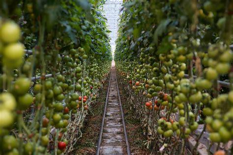 backyard farms maine backyard farms for mainebiz dave clough photography