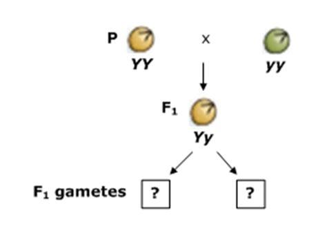 pattern formation in plants masteringbiology pattern formation in plants masteringbiology part a allele