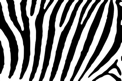 pattern zebra 9 zebra patterns psd vector eps png format download
