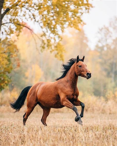 pictures of mustang horses equineflo equine by wengadahl country