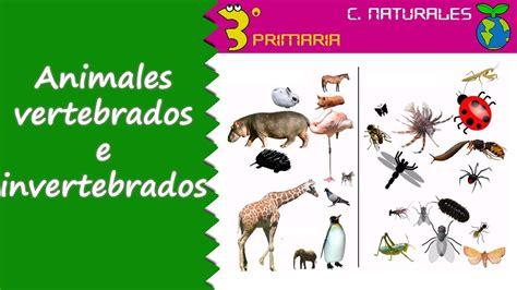 imagenes de animales inbertebrados ciencias de la naturaleza 3 186 primaria tema 5 animales
