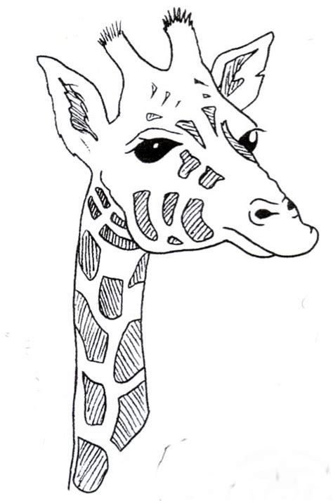 giraffe head coloring pages giraffes free colouring pages