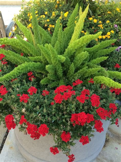 Ferns In Planters by Container Gardening Inspirations Worthy Of Pinning