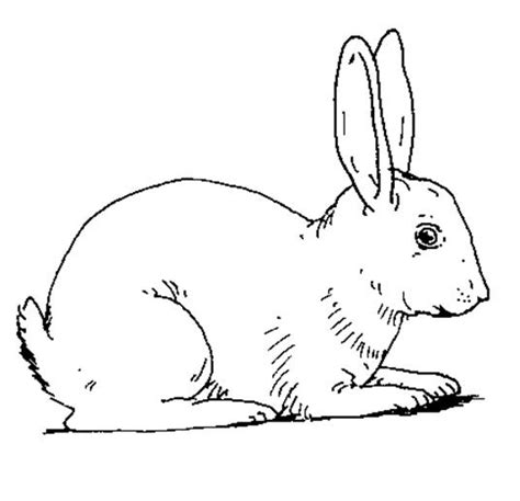 Free Coloring Pages Of Rabbit Rabbit Coloring Page