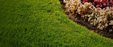 landscaping fort worth mlb landscape landscape mlb