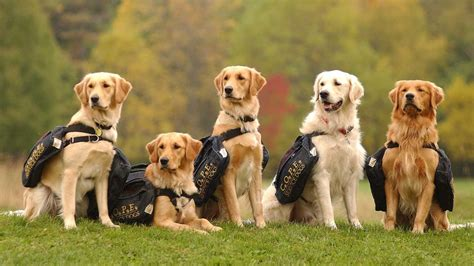 schools for service dogs our mission history cope service dogs