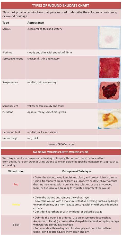 sheet types 65 best nursing school study tips nclex images on