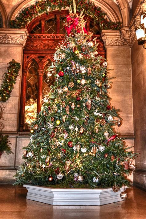 beautiful christmas trees   world