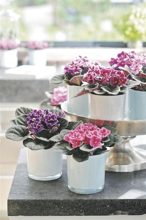 como cuidar de violetas africanas cuidar de violetas saiba como cuidar delas blog
