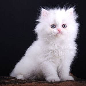 wallpaper anak kucing comel kucing comel dan lucu