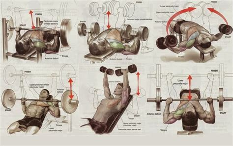 chest mass workout 5 exercises for building the best