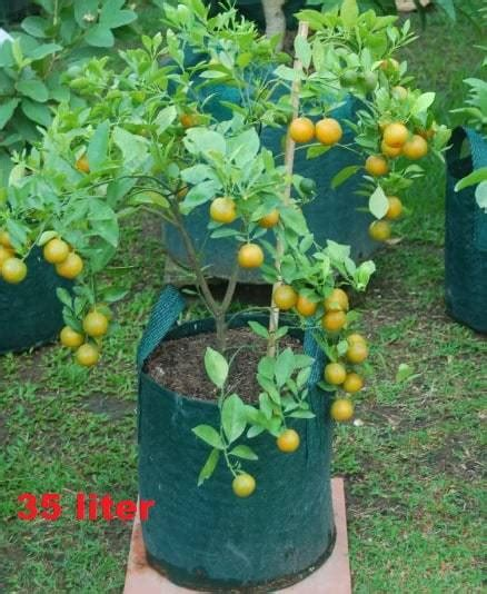 Planterbag 20 Liter Hijau jual planter bag hijau 35 liter bibit