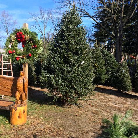 fresh cut christmas trees at wards farm in ridgewood