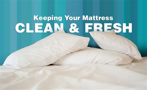 Cleaning Out Of A Mattress by Mattress Cleaning In Greenville Sc