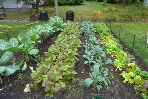Vegetable Raised Bed Garden Layout - farmers should make house calls boing boing
